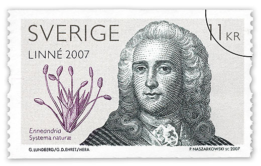 Carl von Linné illusration